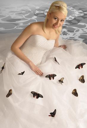 babochki-na-svadby