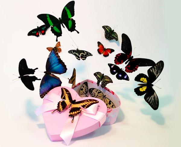 салют из бабочек бизнес
