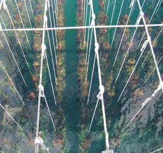 ферма по выращиванию мидий