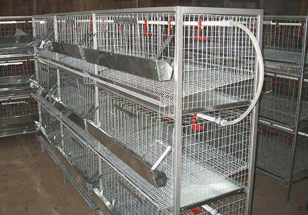 клетки для птицефабрики