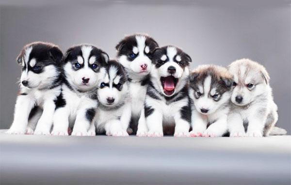 разведение собак бизнес