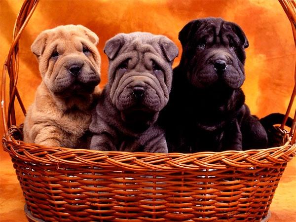 заработок на собаках